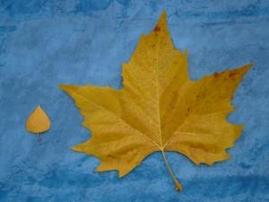 leaves-79990_640